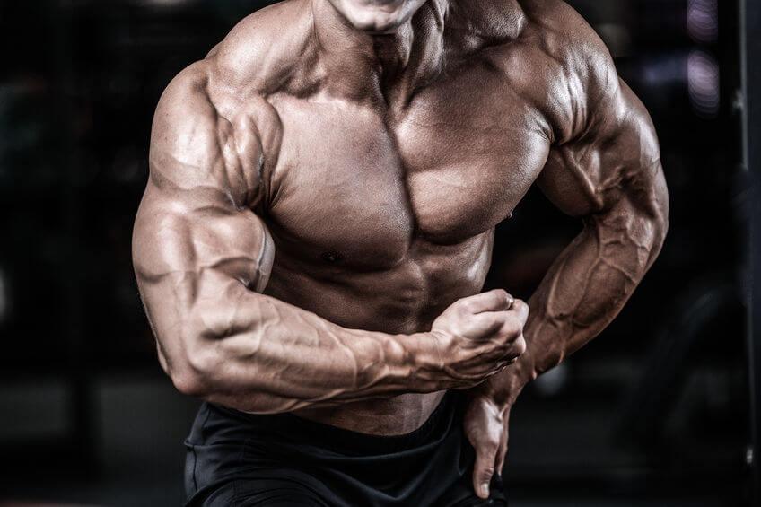 Muskelaufbau Bodybuilding